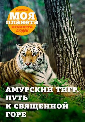 amurskii-tigr-put.jpg