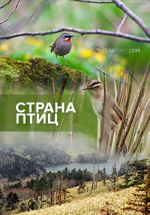 Страна птиц