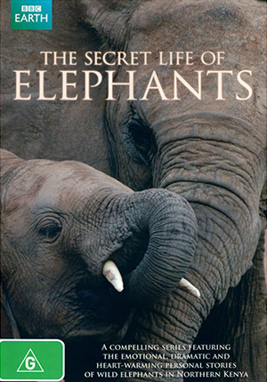 Тайная жизнь слонов